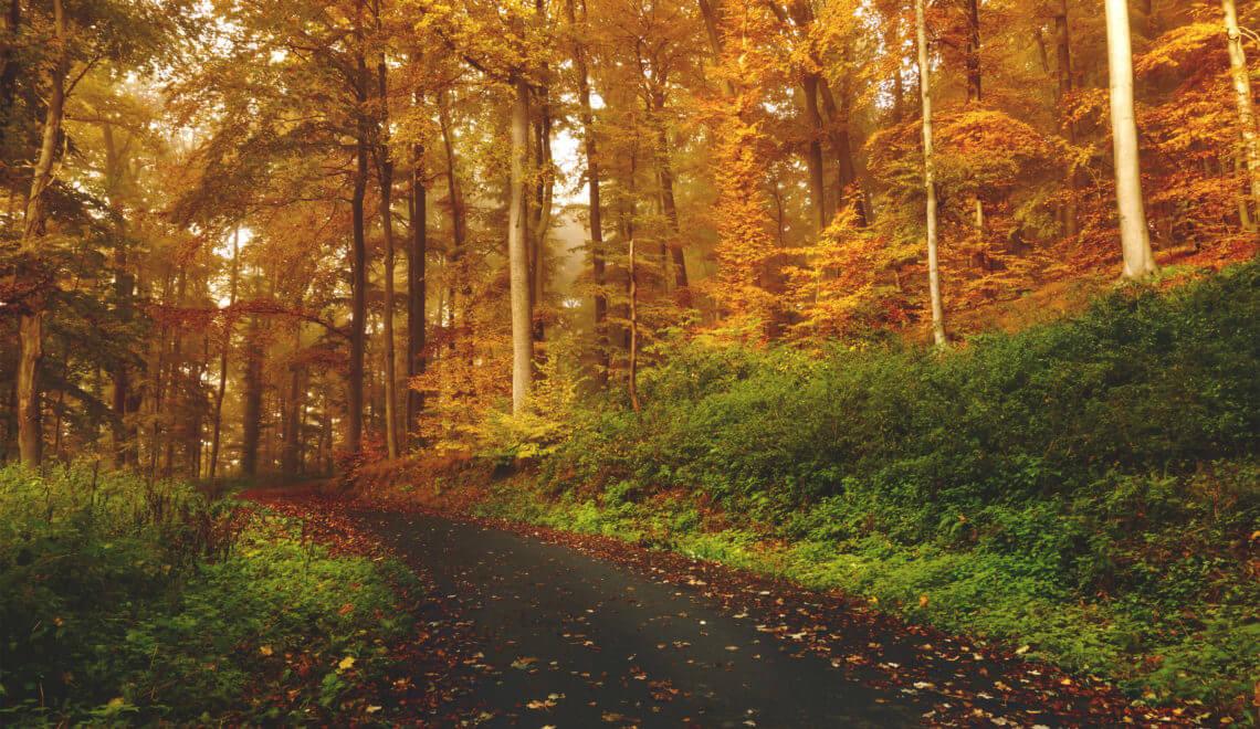 Gründe für den Herbst