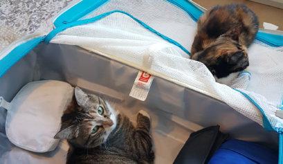 Ich packe meinen Koffer -